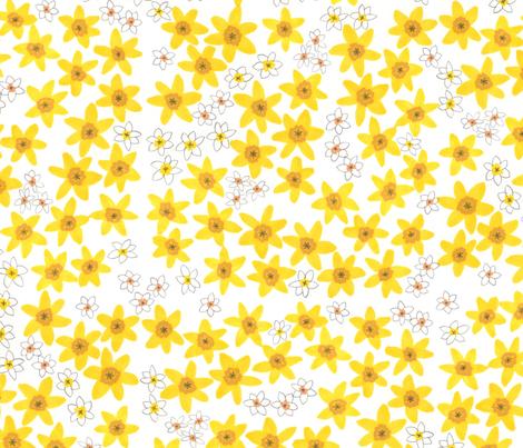 Daffodil for St.David
