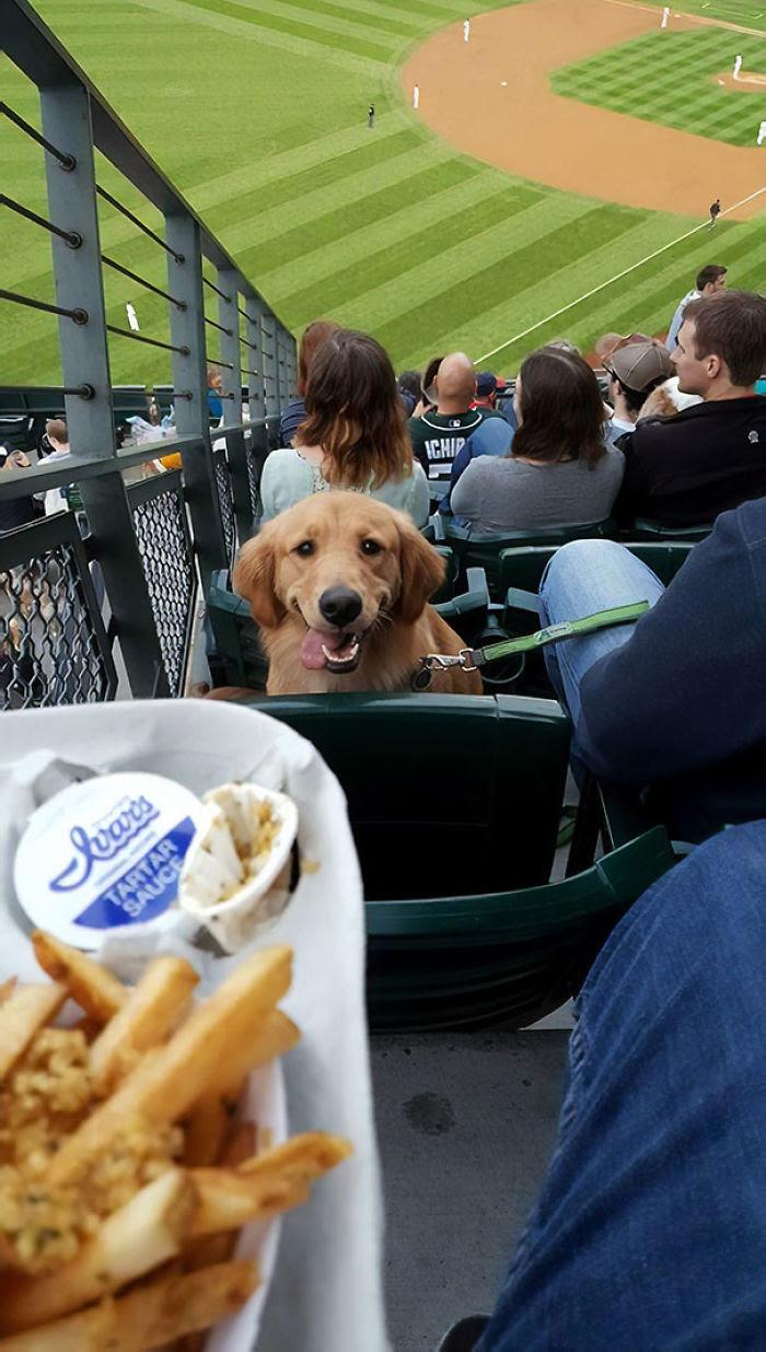 C'était «Apportez votre nuit de chien» au jeu des marins de Seattle la nuit dernière. Il m'a regardé tout le temps comme ça