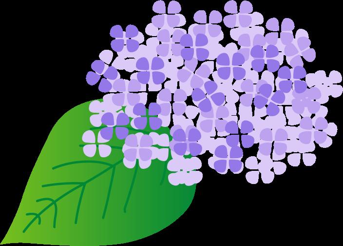 梅雨 紫陽花のイラスト無料素材