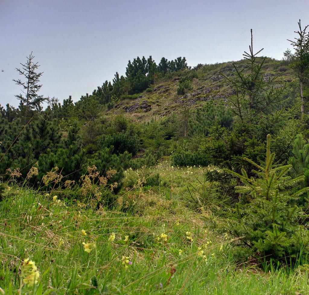 Ceahlău Massif Grass / Flowers