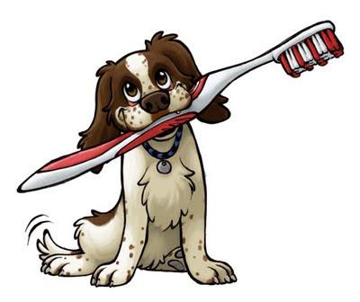 Cómo cepillar los dientes a un perro