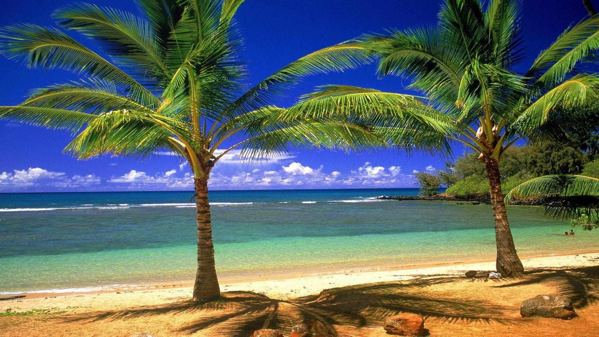 Beach Palm Trees Wallpapers 58 Images
