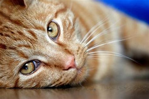 A Cat is the Best Natural Mouse Deterrent   How to Get Rid of Mice