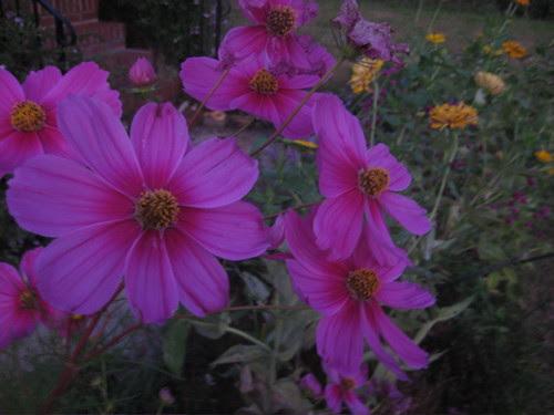 evening flowers 2