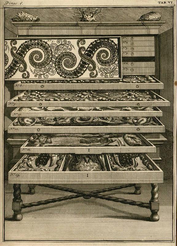 Levinus Vincent wunderkammer illustration, 1715