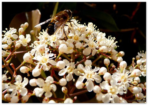 la abeja sobre la flor