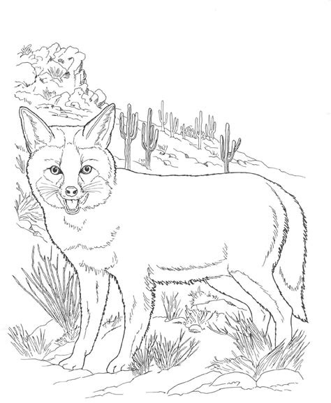 north american wildlife coloring pages desert animals
