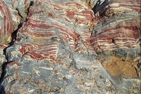 """Résultat de recherche d'images pour """"Le plus vieux fossile a été trouvé en Australie (3,4 milliards d'années)"""""""