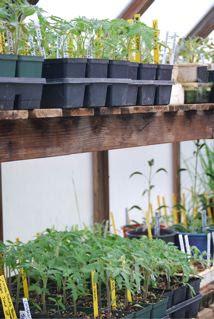 Greenhouse seedlings 2