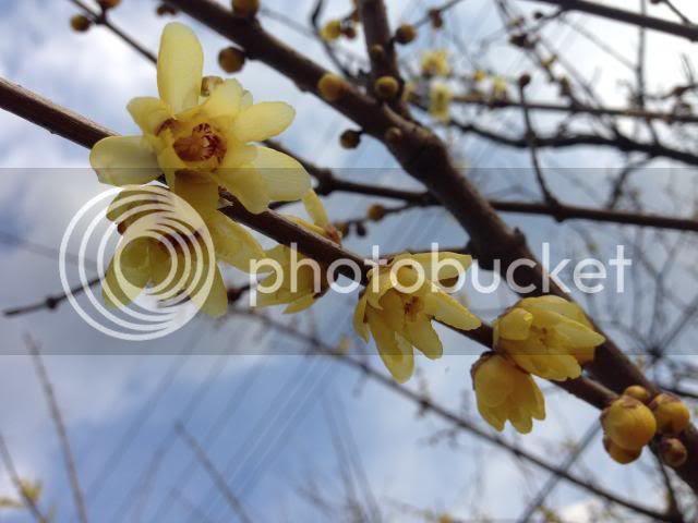 photo IMG_2543_zps58607288.jpg