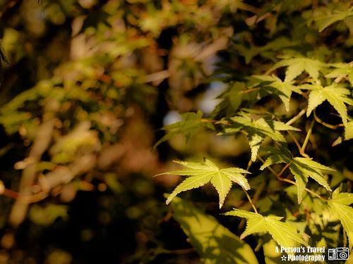 2011Kyoto_Japan_ChapThree_TopPic
