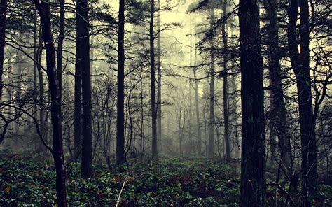 forest background hd google search wakakirisnow white