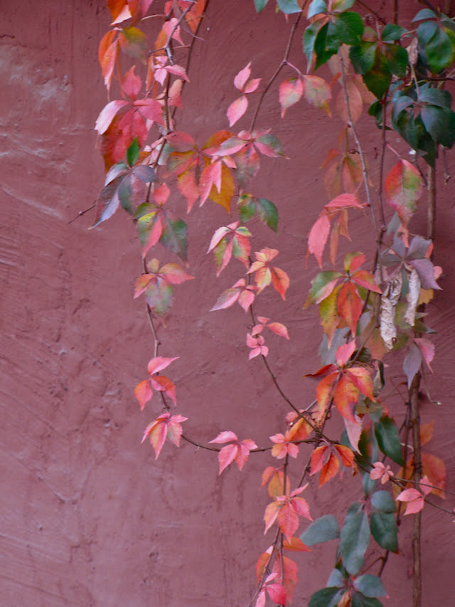 Autumn in Chile