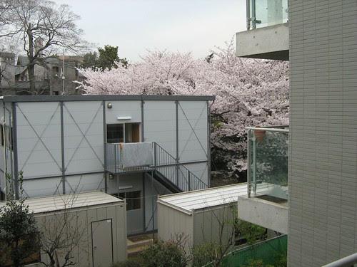 View outside my window