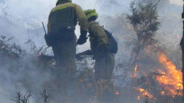 El fuego promueve que en muchos ecosistemas haya más variedad de especies animales y vegetales, porque crea una mayor diversidad de ambientes para vivir