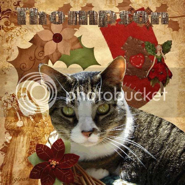 Holly Daze,Tabby Cat,Domestic Cat,Happy Holidays