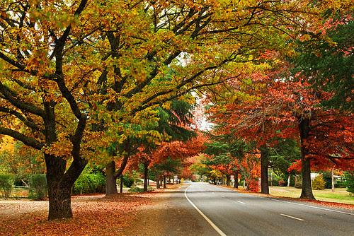 Bright, Victoria, Australia, Delany Avenue, autumn IMG_9825_Bright