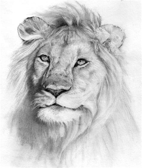 nature animals drawings fourwallsonlycom drawing