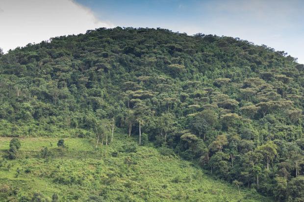 Gorilla Trekking in Uganda: How to Plan an Unforgettable Experience