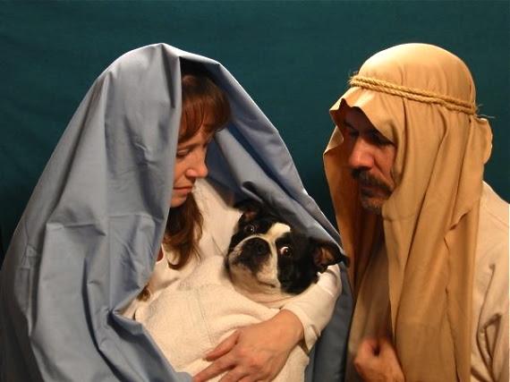 dog nativity