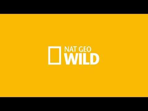 Assistir Nat Geo Wild Online