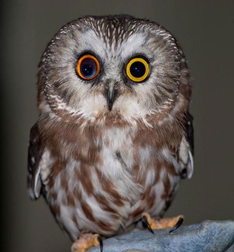 20 animais extraordinariamente belos com olhos ímpares 13