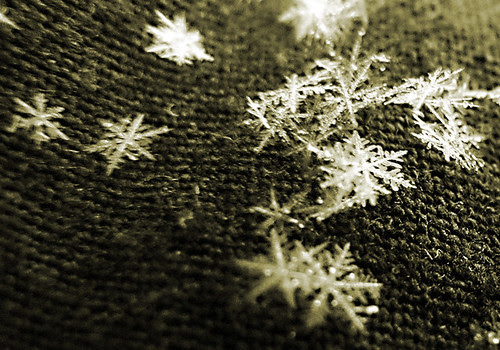 snowflakes-crop5805