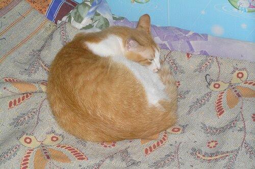 Спит наш зайчик рыженький!
