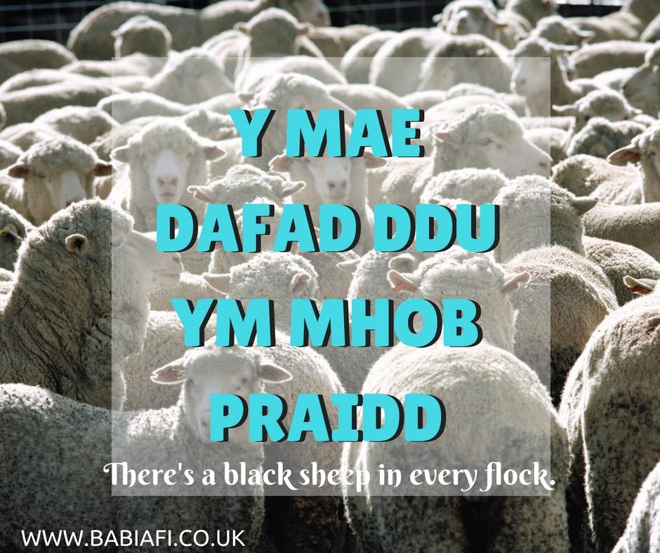 Y mae dafad ddu ym mhob praidd - There's a black sheep in every flock.