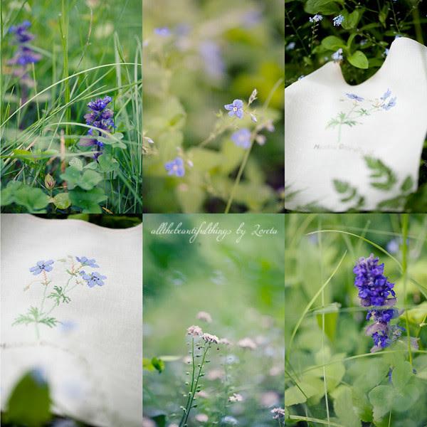 Meadow Cranes-bill (Kazuko Aoki)