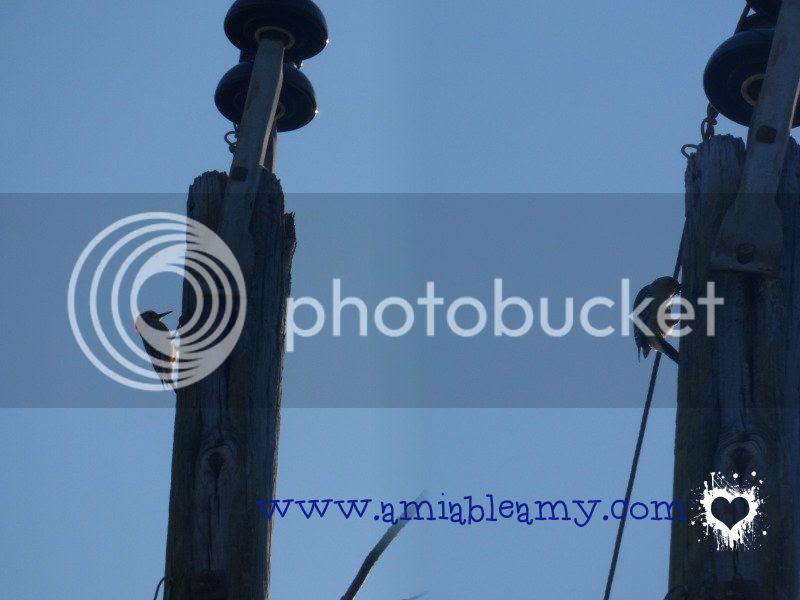 woodpecker, WB150F