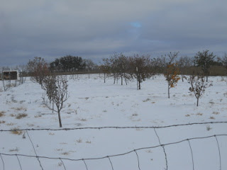 Sleet - View of Orchard