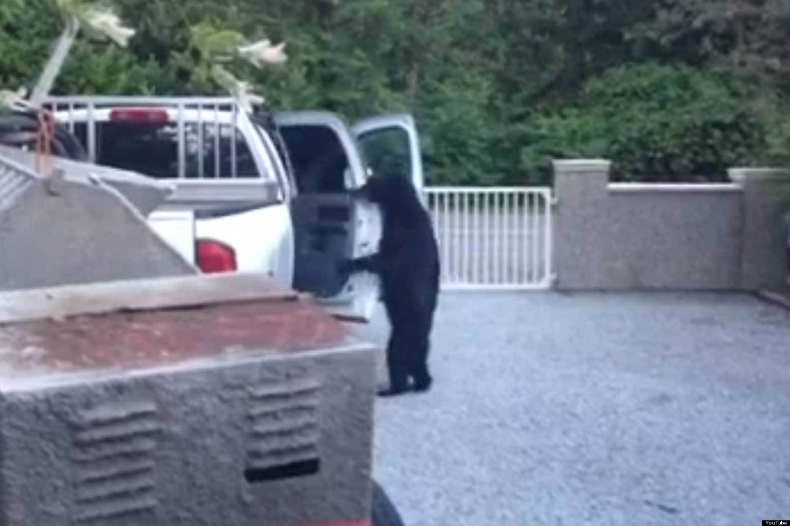 Αρκούδα άνοιξε πόρτα αυτοκινήτου