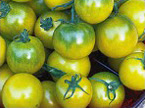 Cherry Verde