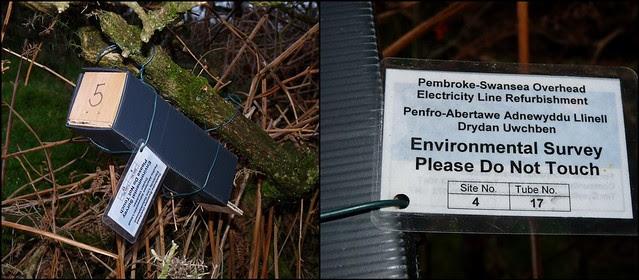 Environmental survey, Bryn-Bach-Common