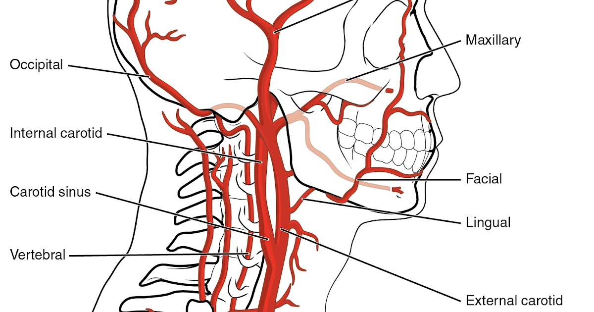 Multiple Sclerosis Research: Visualizing Odd shaped lesions