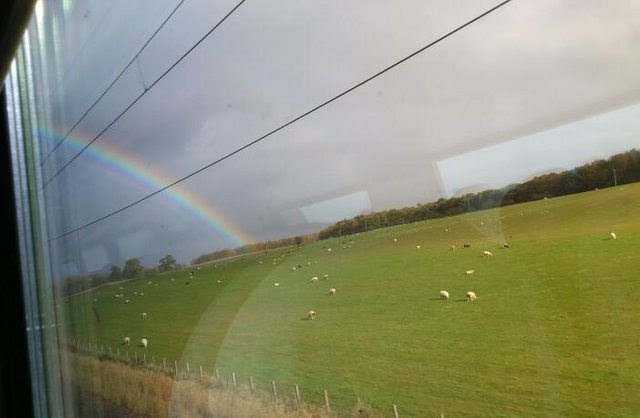 Scotland from the train sheep grazing in fields and rainbow