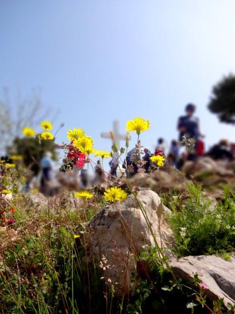 Flowers on Krizavec