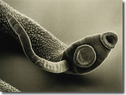 parasites16