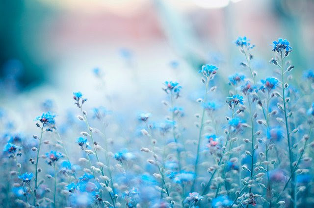 Resultado de imagem para flores delicadas tumblr