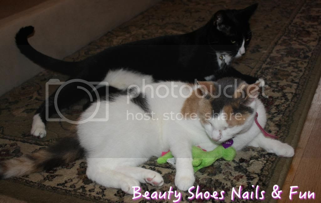 photo cattoys-3_zpscd17509c.jpg