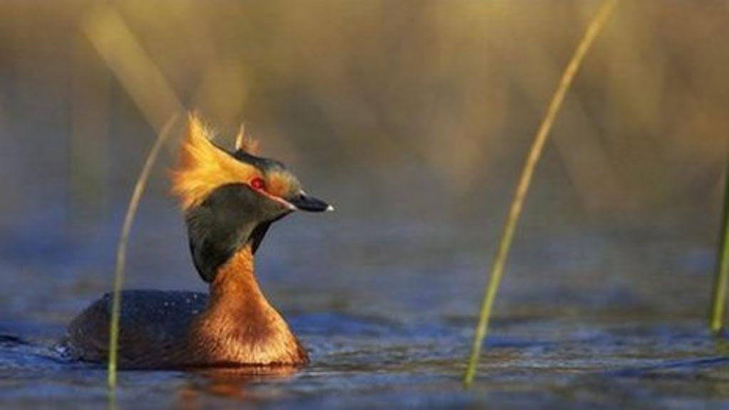 wild bird breeds