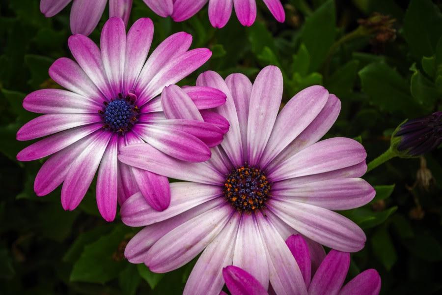 Imagen De Flores Hermosas Para Fondo De Pantalla Foto Gratis