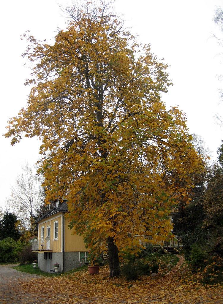 My Grandfathers Tree