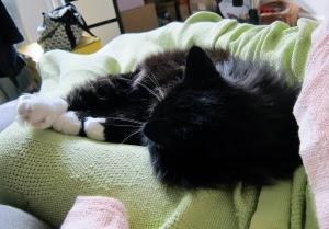 sleeping-on-you-cat