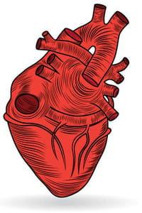 Organes mélangés