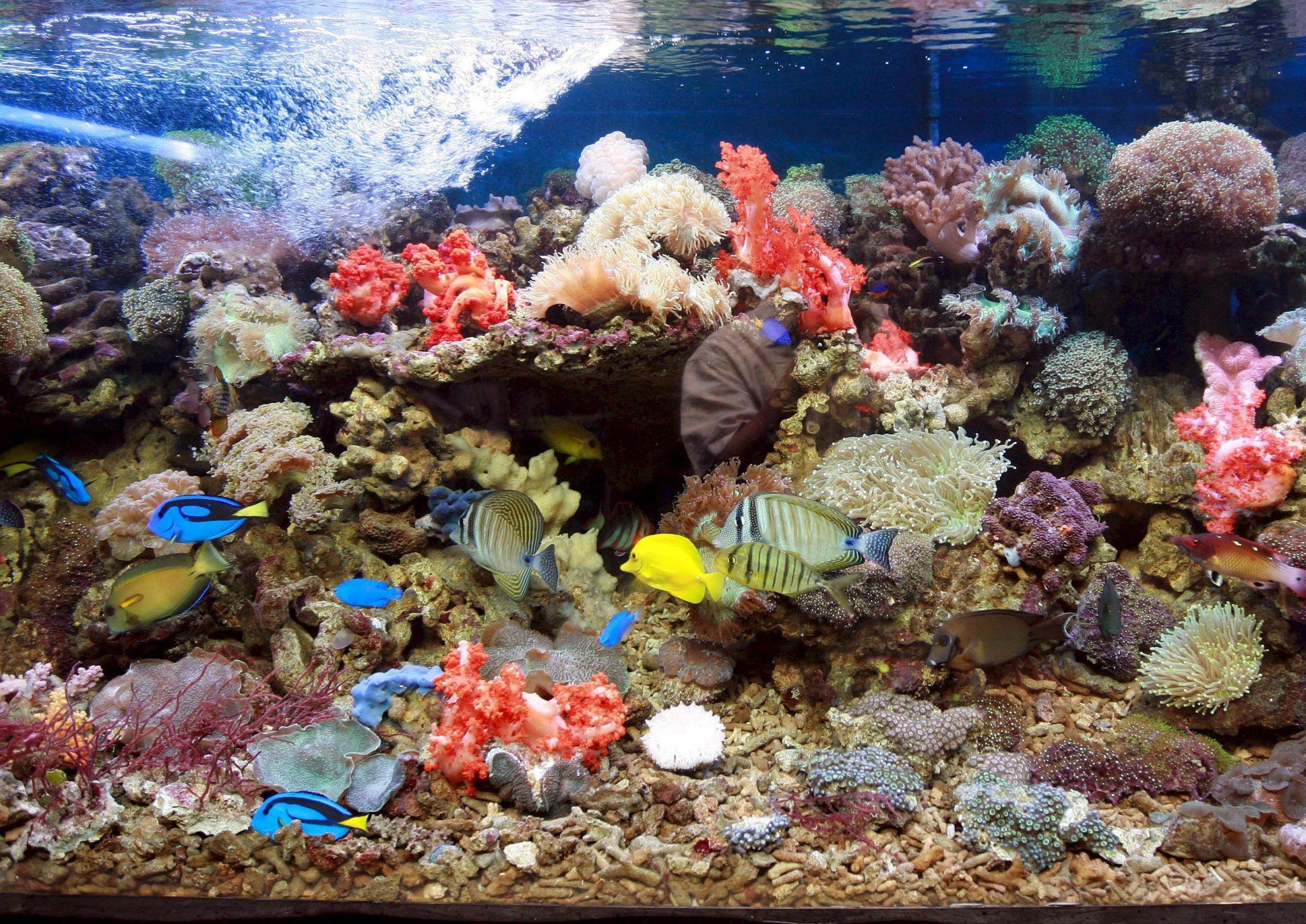 Barrera de coral en un acuario en un mercado de Yakarta (Indonesia) en una muestra de la primera Conferencia Oceánica Mundial (WOC) para llamar la atención de la comunidad internacional sobre las consecuencias de la subida de las temperaturas en los océanos. EFE/Adi Weda