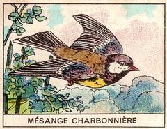 mart2oiseaux 654
