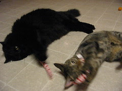 HB and Maggie get their nip candy canes