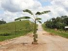 Moradores plantam bananeira em rodovia  (Tashka Peshaho Yawanawa/Arquivo Pessoal)